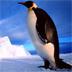 企鹅拼图游戏 v2.9.11 安卓版