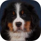 伯恩山论坛app V2.0 iPhone版