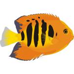 热带鱼水族箱(屏幕保护程序)下载 绿色官方版